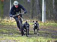 Dog scootering (zewag)