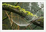 Zátiší s pavučinou... (Vlastimil Pibil)