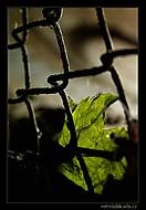 V zajetí (Petr Sládek)