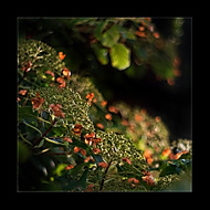 Podzimn� z�ti��... (Vlastimil Pibil)