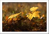 Podzimní snění... (Vlastimil Pibil)