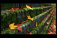 Podzimní opěrná zeď... (Vlastimil Pibil)