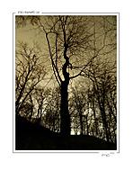 Tajemný les (*mio*)