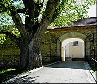 brána a strom (elpí)
