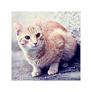 Kočkovka obyčejná (anees)