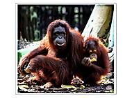"""Pralesní lidé - """"Orang utan"""" (Alena a Vojen Benda)"""