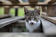 Mačka domáca medzi paletami (brendon)