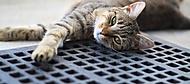 Kočičí relax (zimak.k)