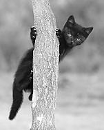 Kotě (Megas.Lakkos)