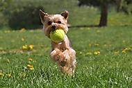 Hrátky s tenisákem (xfiala43)