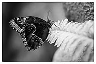 Motýl 2 (Kuběna Miroslav)