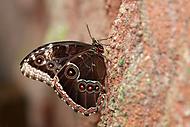 Motýl 3 (Kuběna Miroslav)