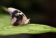 Motýl (Kuběna Miroslav)