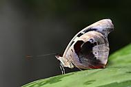 Motýl 4 (Kuběna Miroslav)