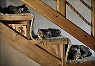 Kočky tři (ali111)