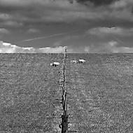 Ani plot nás nerozdělí (ali111)