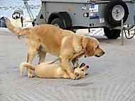 Fiscardo dogs (Megas.Lakkos)