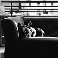 Odpolední odpočinek (wwwerny)