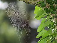 Zázrak přírody (tanahorka)