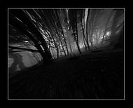 prelet tajomným lesom  2 (Ichy)