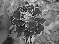 Podzimní květ (jakub0196)
