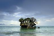 Václav_Klíma_Zanzibar (kavenca)