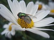 Lenka Brádlová - Moucha (brokvicka)