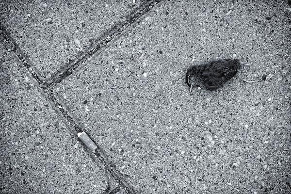 mokré dospívající kočička dostat v prdeli