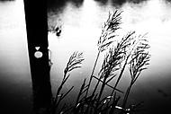 Depka v černobílém - MoML 19. srpna 2016 (martin.breza)