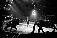 cirkus I. (Petr.P.)