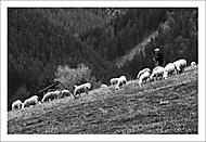 V kopcích nad Kalameny... (Vlastimil Pibil)
