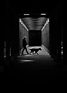 Večerní procházka (babyvrba)