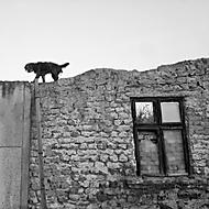 o ztracených domovech (vhumanik)