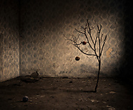 The Abandoned... Cotton Tree (Cako_SK)
