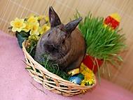 Velikonoční králíček (rcorp)