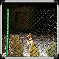 za plotem (šel okolo)
